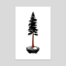 Redwood Bonsai - Canvas by Chris Cerrato