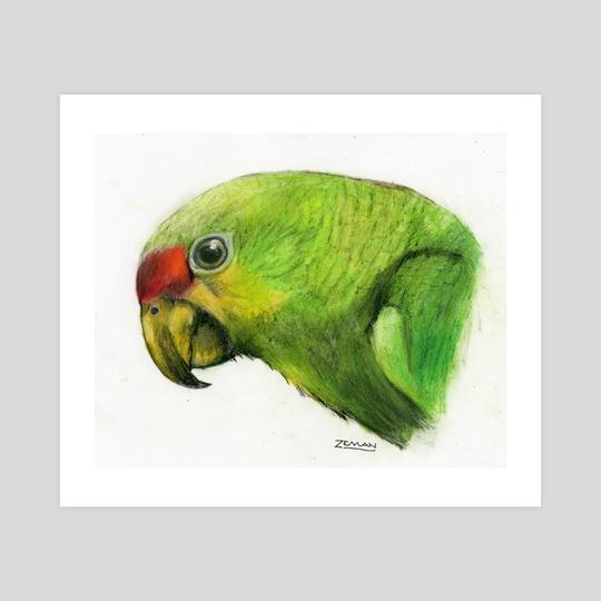 Green Parrot by Ronald Zeman