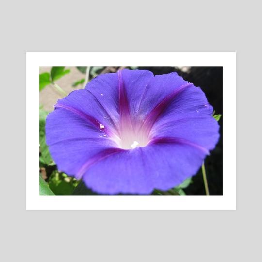 Violet flower. Macro photo. by Dmytro Rybin