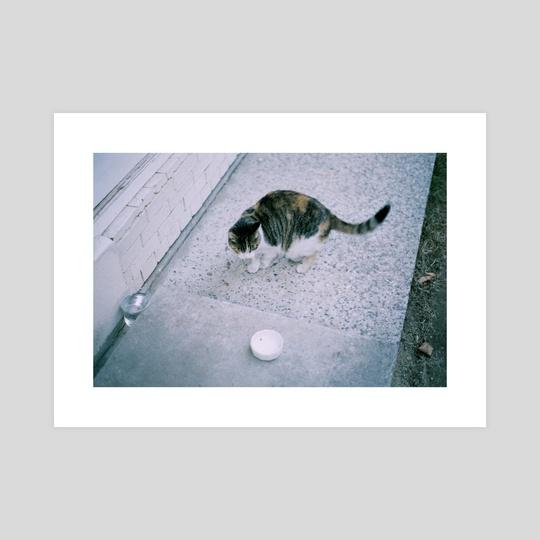 Cat by Da Eun Kim