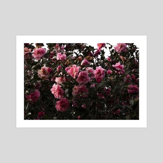 flowers  by Danielle McFarlane