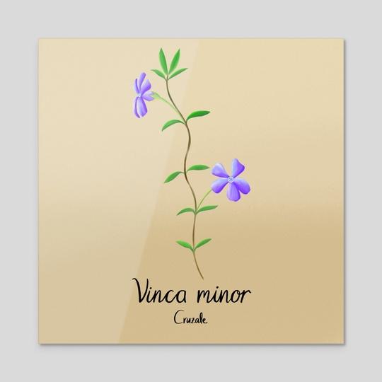 Vinca minor, Periwinkle by Andrea Cruz Alegria