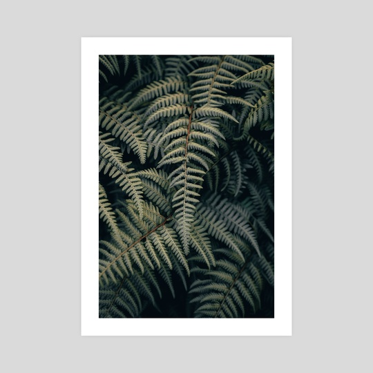 Ferns on Ferns by Colby Morris