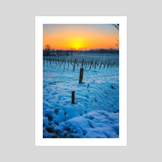 Sunset on snowy vineyard by Giordano Aita