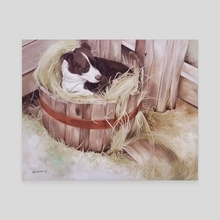 The Perfect Spot - Border Collie - Canvas by Abby Anderbard