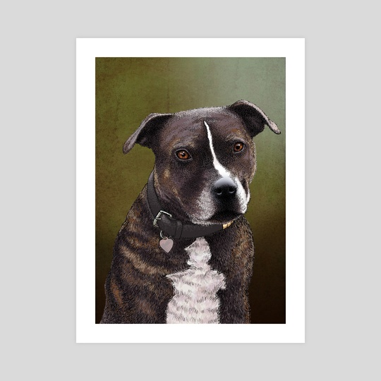 Staffordshire Bull Terrier by Carl Conway