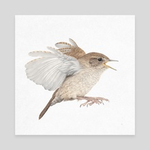 House Wren - Canvas by Veronica Park