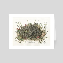 Eastern Massasauga Rattlesnake - Art Card by Josh Stutz