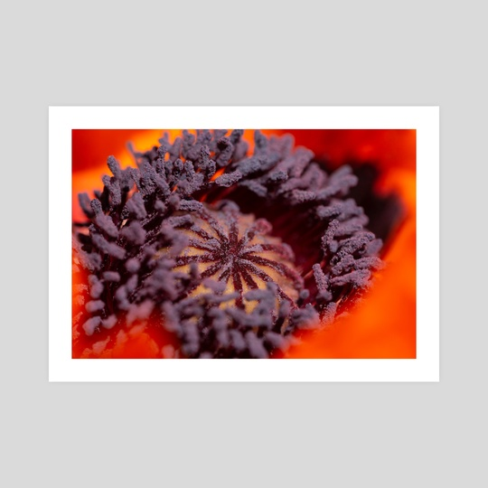 Purple Harvest by Martin Boehme