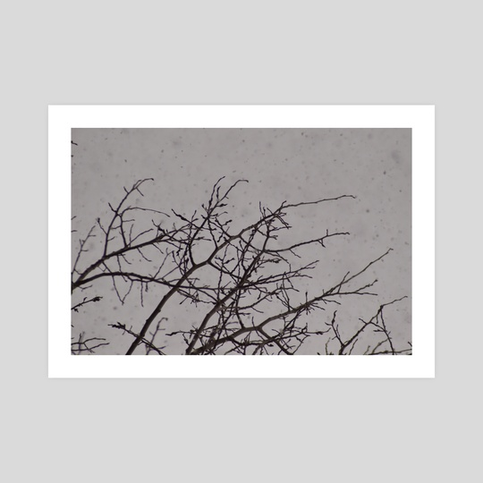 Snowy Tree Branches by Brian George