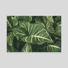 Dark Green Botanic Motif Photo - Canvas by Daniel Ferreira Leites