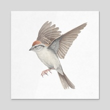 Chipping Sparrow - Acrylic by Veronica Park