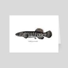 Dallia pectoralis - Alaska Blackfish - Art Card by Rene Martin