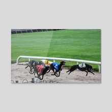 Dog racing - Acrylic by Liora Bronshtein