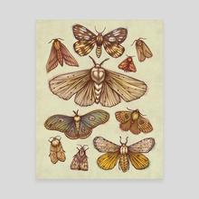 Moths - Canvas by Kate O'Hara