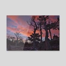 Glacier Rose - Acrylic by Ben Kelsey