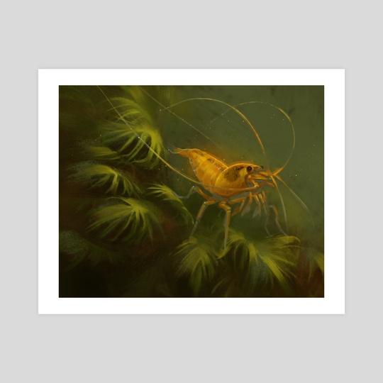 Yellow Bee Shrimp by Mari-Liis Kirsimägi