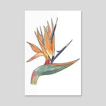 Bird of Paradise - Acrylic by Francesca Ciccone