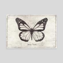 Danaus Plexippus - Canvas by Mike Koubou