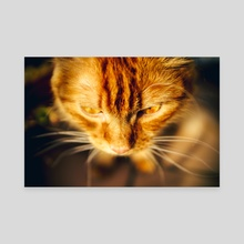Red cat - Canvas by Nazar Hrabovyi