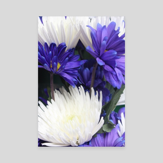 Purple Daisies  by Jazzmin Lanzo