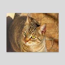 Cat - Acrylic by Vlad Stroe