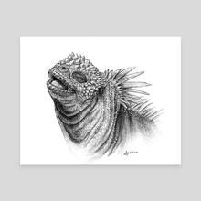Marine Iguana - Canvas by Danielle Dufault