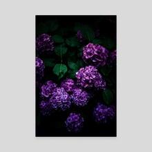 Hydrangea 01 - Canvas by noir blanc777