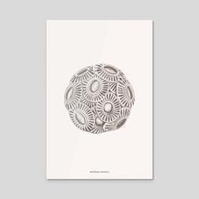 Emiliania huxleyi - Acrylic by Dorothy Yan