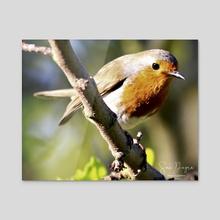 European Robin - Acrylic by Sam Dogra