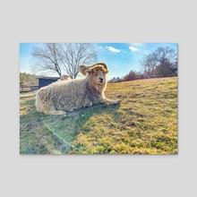 Laverne - Acrylic by Catskill Animal Sanctuary
