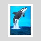 Orca breaching - Art Print by Ronald Zeman