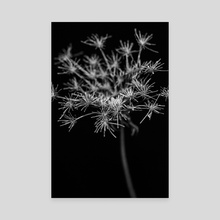 Hogweed - Canvas by Elena Prokofyeva