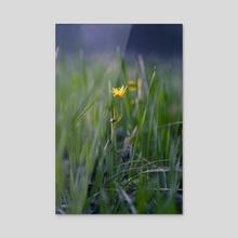 Flower in the Grass - Acrylic by Vitali Pikalevsky