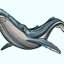 Friendly Humpback Whale  - Canvas by Marlaina  Mortati
