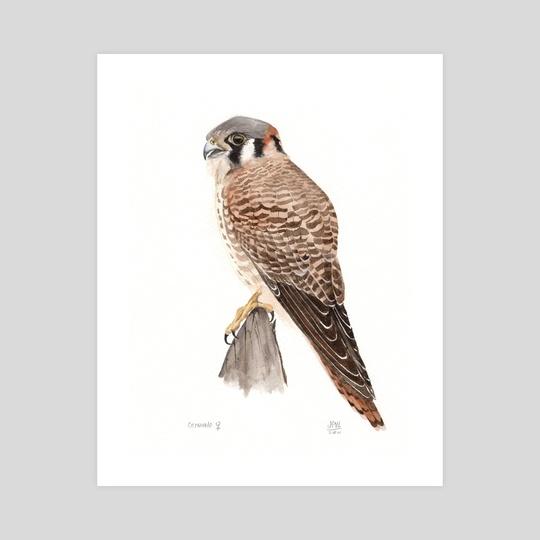 Falcon Watercolor Male by JP Lara
