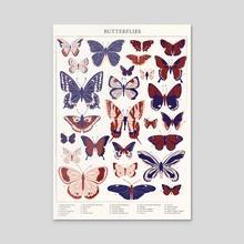 A-Z Butterfly Poster - Acrylic by Emily Gunn