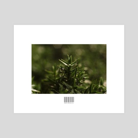 Macro Evergreen by John Jackson