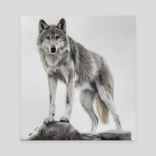 Wolf - Canvas by Kieran O'Connor
