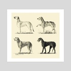 Irish wolfhounds - Art Print by Kelshray