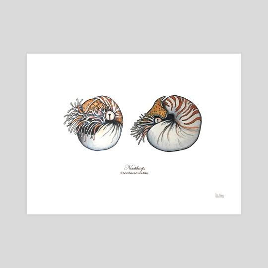 Chambered Nautilus by Skylaar Amann