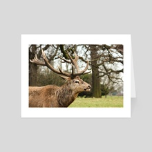 Red deer stag #1 - Art Card by Ryan Wait