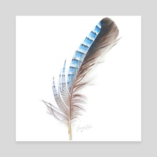 Blue Feather Drawing - Canvas by Emmy Kalia