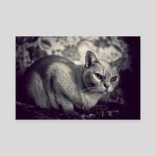 Cat - Canvas by Traven Milovich