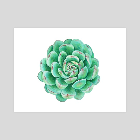 Succulent by Nika