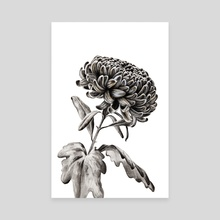 Chrysanthemum - Canvas by Nika Akin
