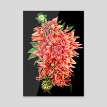 Life Cycle of a Dahlia - Acrylic by Liv