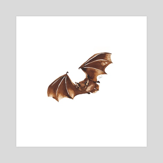 Pipistrelle Bat, Ink Animal Collection 1  by Elizabeth Witchalls