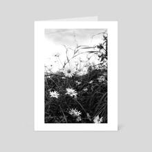 campo de margaritas - Art Card by divina quinina