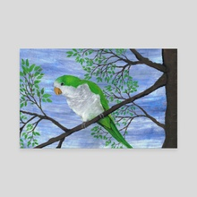 Quaker parrot - Canvas by Bianca Wisseloo